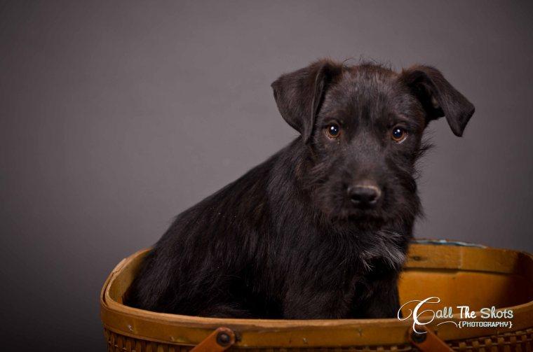 Maricopa pet adoption