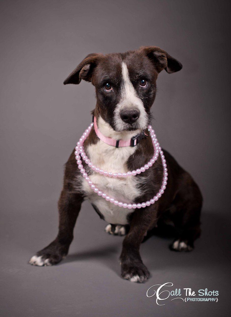 maricopa Pet photography