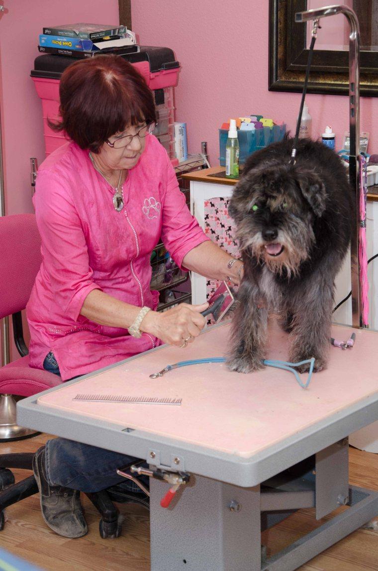 Maricopa Dog groomer