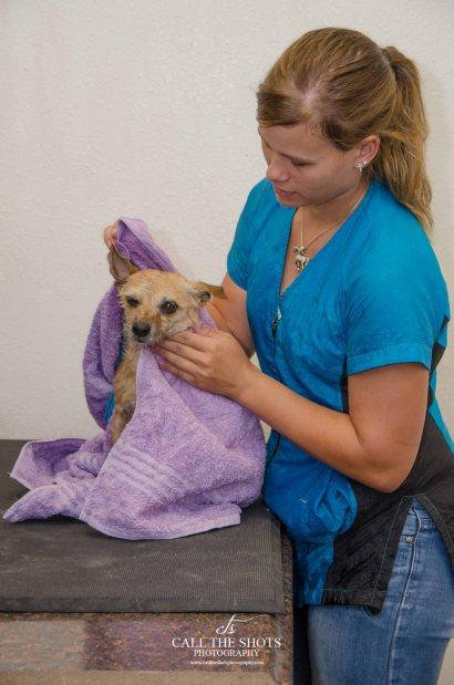 Maricopa dog bath